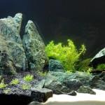 Kamień naturalny w akwariów