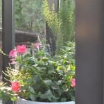 Kompozycja roślin w donicy