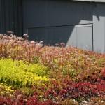 Rośliny na dachu wiaty