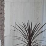 Rośliny w ozdobnej donicy na tle płytek z trawertynu