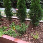 Kompozycja roślinna na tarasie