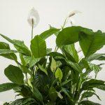 Roślinny filtr