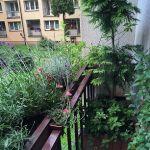 Donice z kompozycjami roślinnymi