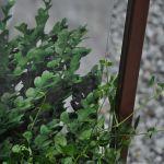 Zielone balustrady