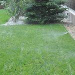 Trawnik z rolki w ogrodzie