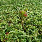 Zielony taras