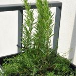Kompozycja roślinna w donicy
